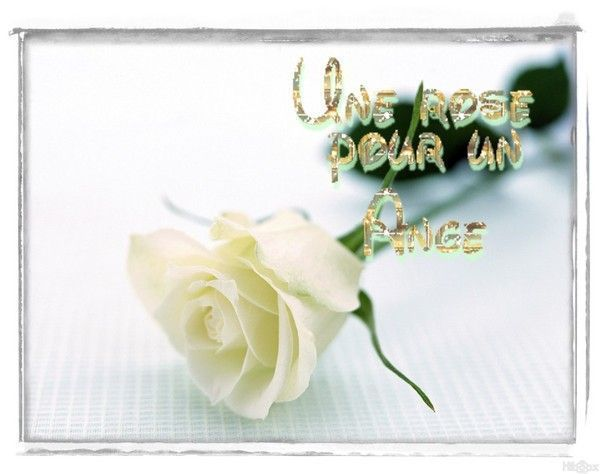 belleimages rose ......................gifs